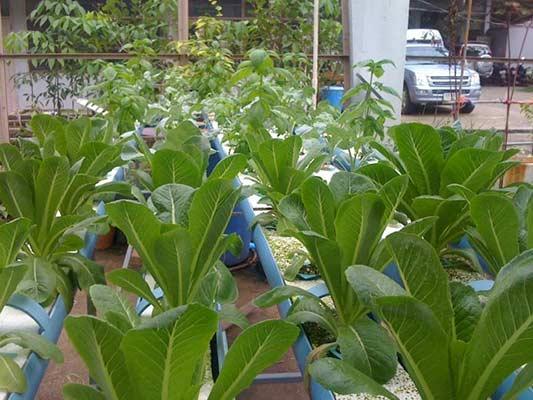 nährstofflösung für pflanzen
